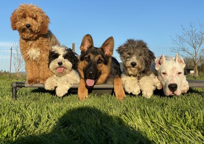Puppies Back For Off Leash Camp